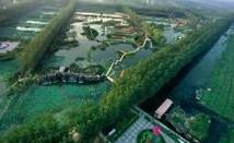 Tengzhou Weishan Lake Wetland